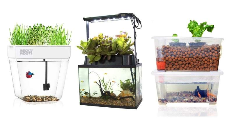Aquaponics Market to set astonishing growth by 2026