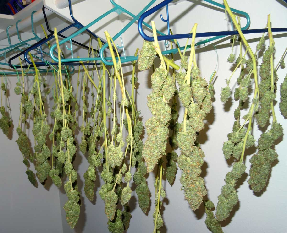 Global Marijuana Drying & Curing Equipment Market Foreseen to Grow Exponentially by 2026:  DHydra Technologies, Darwin Chambers, Protein Solutions,Cann Systems
