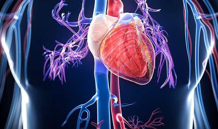 Global Vascular Imaging Market to witness an outstanding growth during 2020-2026 according to new research report:  GE Healthcare, Shimadzu, Novadaq Technologies, Samsung Medison
